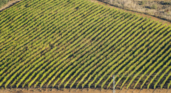 A vineyard in Golan Heights: Wine is a burgeoning sector of Israel's explosive agricultural success. The country now produces about 95% of its food needs, thanks to restoration and expansion of Israel's arable land, as well as innovations in irrigation and desalination.